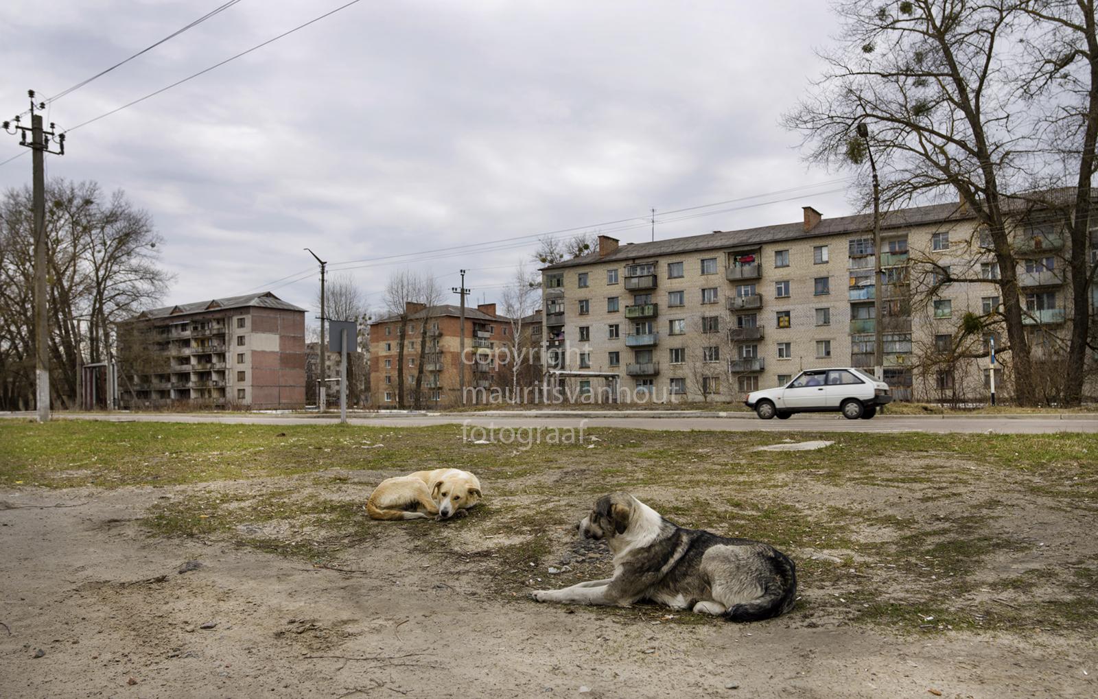 Oekraine, Tjernobyl stad, veel zwerfhonden